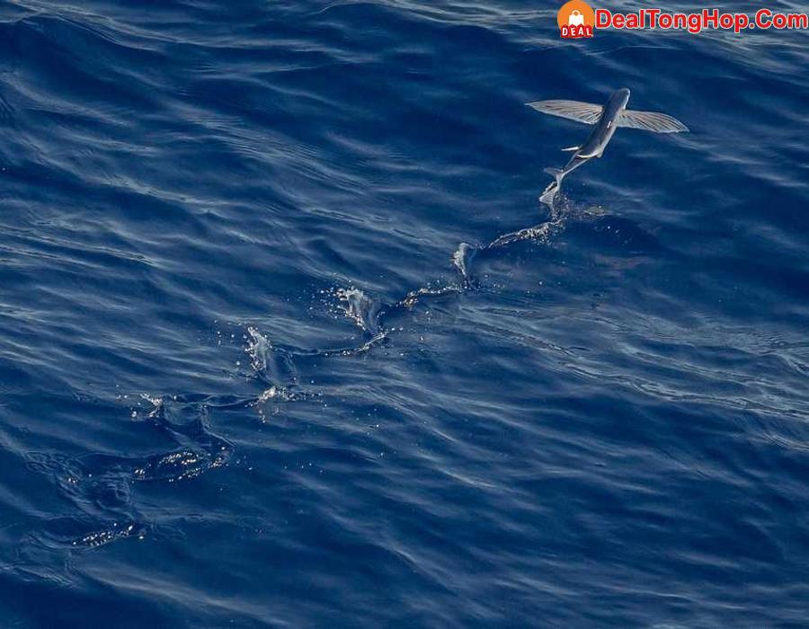 Nam Ph Audio khai trng showroom mi ti H Ni  nh 1