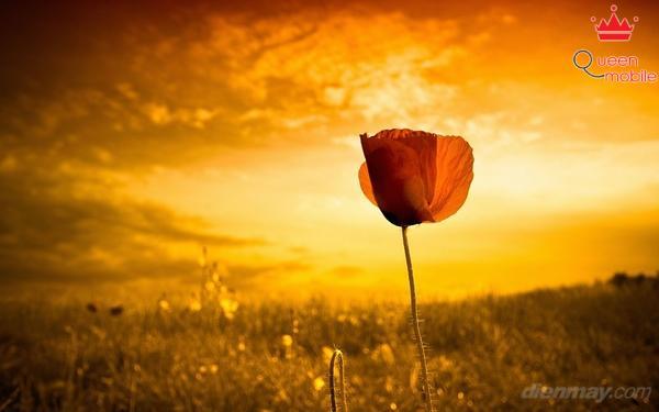 6 cách chụp hoa đẹp ngày Tết