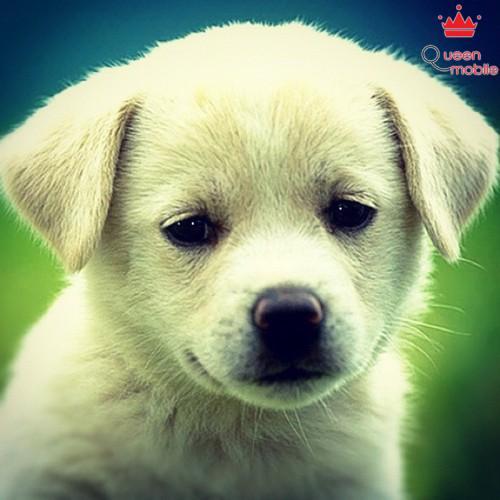 Chó con qua instagram