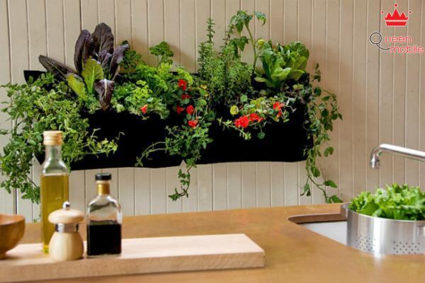 Mang thiên nhiên vào căn bếp nhà bạn