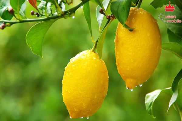 Vitamin C có thể giảm cholesterol trong máu