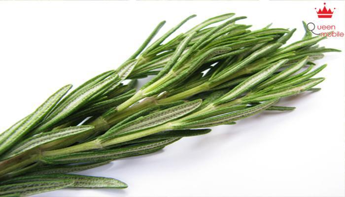 Tinh dầu cây hương thảo có tác dụng diệt khuẩn và loại bỏ mùi hôi