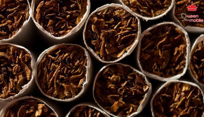Thuốc lá sẽ vô hiệu độc tố do ong chích