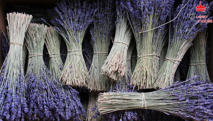 Hương hoa oải hương giúp bạn giảm stress hiệu quả