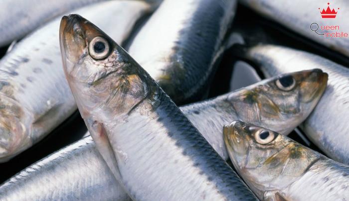 Cá tươi miệng ngậm cứng, không nhớt và không có mùi hôi