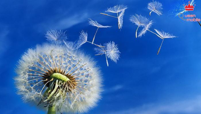 10 loài hoa tốt nhất cho sức khỏe- Bạn có biết?