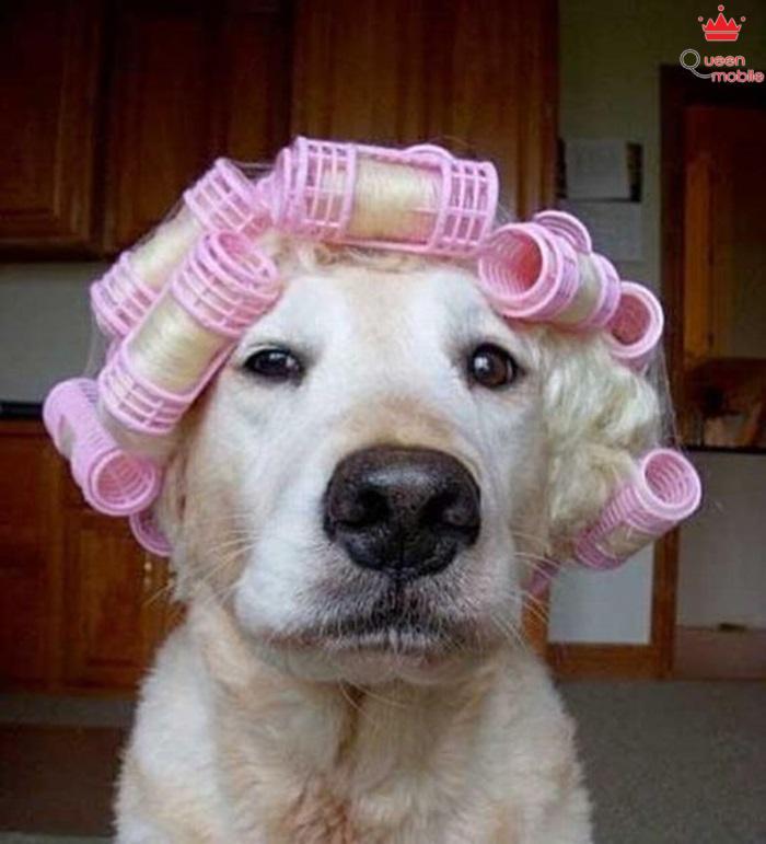 Dạo này mình thích tóc uốn nhìn mới quý-sờ-tộc