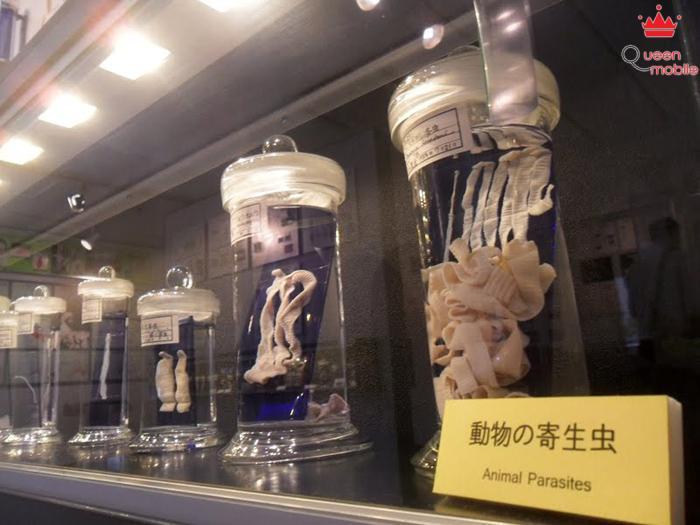 11 viện bảo tàng kì lạ nhất thế giới